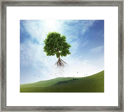 Uprooted Tree Framed Print