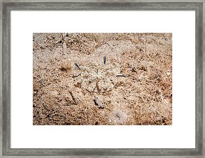 Upside-down Jellyfish Framed Print by Andrew J. Martinez