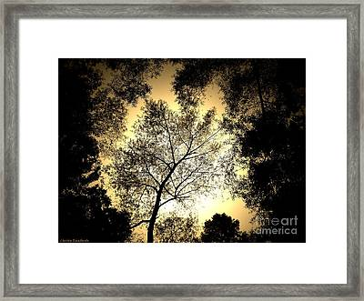 Upward Framed Print by Christy Ricafrente