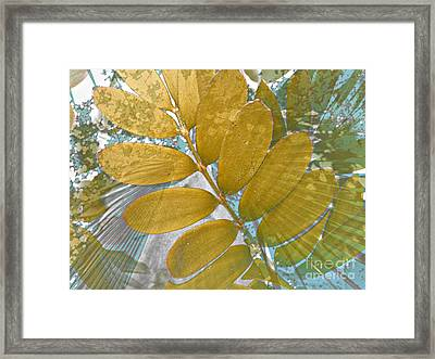 Upward Drift Framed Print