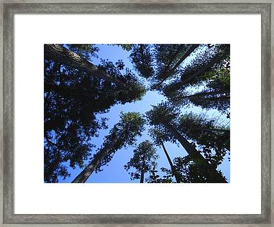 Upward Framed Print by Kimberly Oegerle