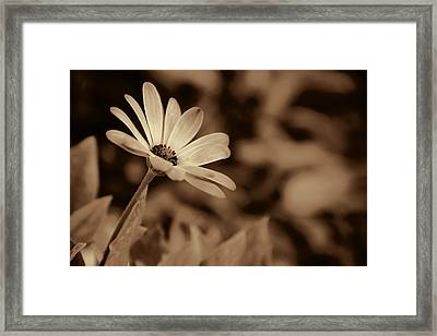 Framed Print featuring the photograph Upward by Oscar Alvarez Jr