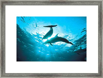 Upward View Of Two Silhouetted Dolphins Framed Print