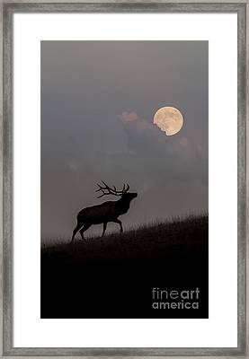 Upwardly Mobile - Yellowstone National Park Framed Print by Sandra Bronstein