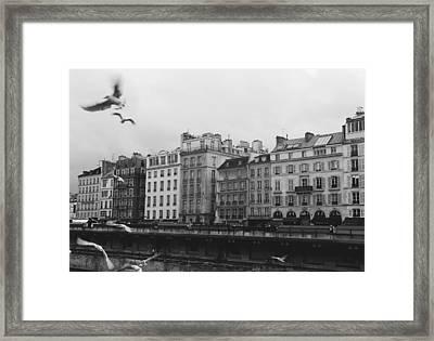 Urban Bird Framed Print