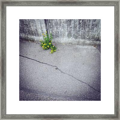 Urban Flora - Yellow Flower And Grey Asphalt Framed Print