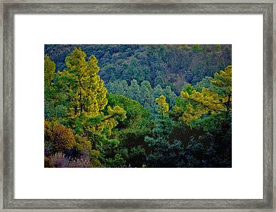 Framed Print featuring the photograph Urban Forrest by Joseph Hollingsworth