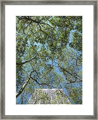 Urban Growth Framed Print