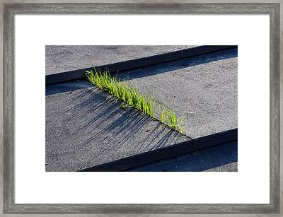 Urban Nature Framed Print by Andreas Berthold