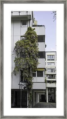 Urban Wisteria Cologne Germany Framed Print by Teresa Mucha