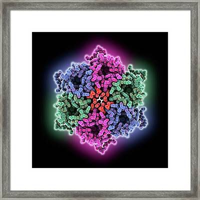 Urea Channel Molecule Framed Print by Laguna Design