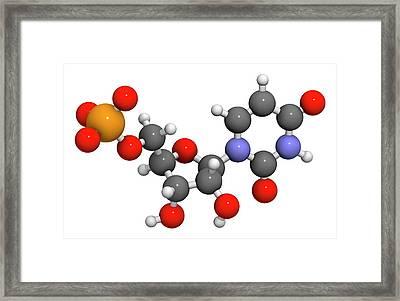 Uridine Monophosphate Nucleotide Molecule Framed Print