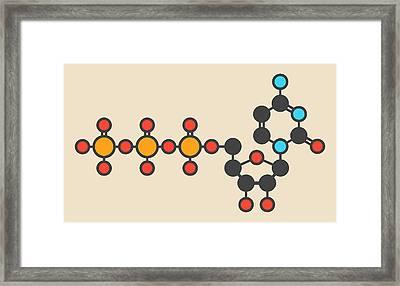 Uridine Triphosphate Molecule Framed Print by Molekuul