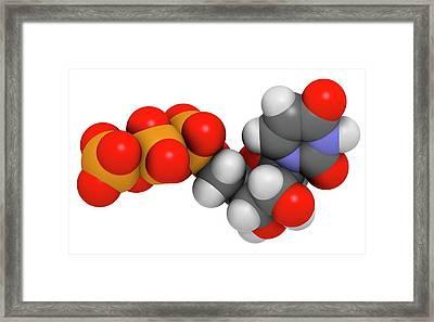 Uridine Triphosphate Nucleotide Molecule Framed Print