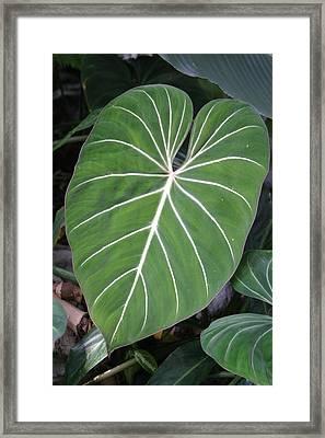 Us Botanic Garden - 121212 Framed Print
