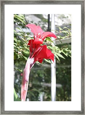 Us Botanic Garden - 121224 Framed Print