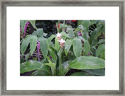 Us Botanic Garden - 121227 Framed Print