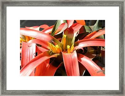 Us Botanic Garden - 12123 Framed Print