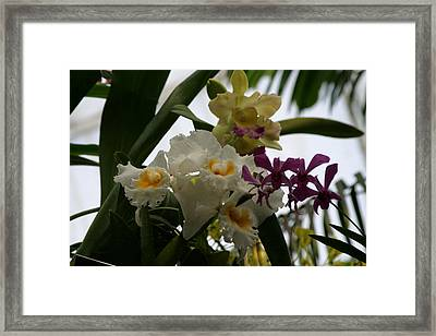 Us Botanic Garden - 121250 Framed Print