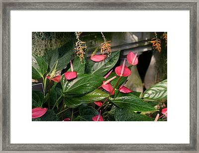 Us Botanic Garden - 121257 Framed Print by DC Photographer