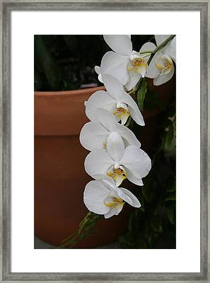 Us Botanic Garden - 12126 Framed Print by DC Photographer