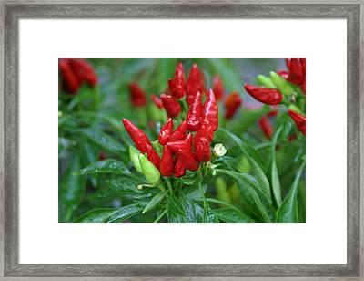 Us Botanic Garden - 121264 Framed Print