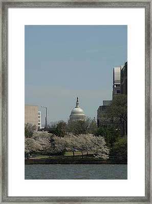 Us Capitol - Cherry Blossoms - Washington Dc - 01131 Framed Print by DC Photographer
