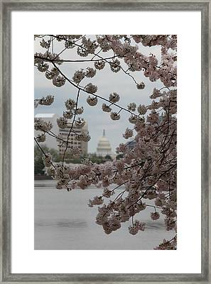 Us Capitol - Cherry Blossoms - Washington Dc - 01132 Framed Print by DC Photographer