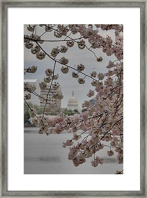 Us Capitol - Cherry Blossoms - Washington Dc - 01135 Framed Print by DC Photographer