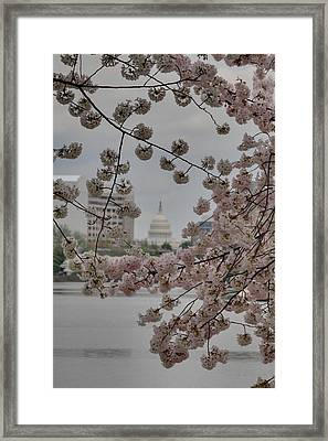 Us Capitol - Cherry Blossoms - Washington Dc - 01137 Framed Print by DC Photographer