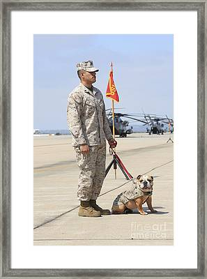 Framed Print featuring the photograph U.s. Marine And The Official Mascot by Stocktrek Images