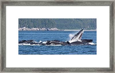 Usa, Alaska, Freshwater Bay Framed Print by Jaynes Gallery