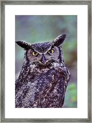Usa, Alaska, Great Horned Owl Framed Print