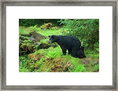 Usa, Alaska, Inside Passage Framed Print by Jaynes Gallery