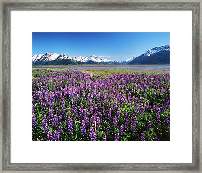 Usa, Alaska, Kenai National Wildlife Framed Print