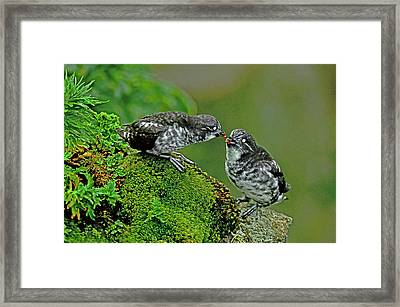 Usa, Alaska, Pribilof Islands, St Framed Print by Jaynes Gallery