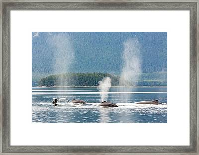 Usa, Alaska, Seymour Canal Framed Print by Jaynes Gallery