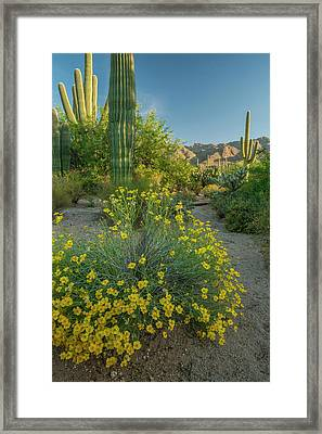 Usa, Arizona, Coronado National Forest Framed Print