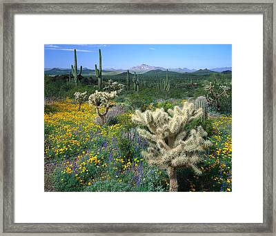 Usa, Arizona, Organ Pipe Cactus Framed Print by Panoramic Images