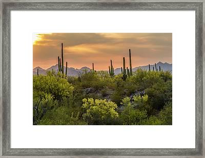 Usa, Arizona, Saguaro National Park Framed Print