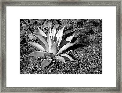 Usa, Arizona, Scottsdale, Mayo Clinic Framed Print by Peter Hawkins