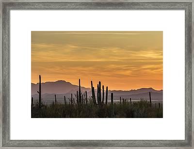Usa, Arizona, Tucson Mountain Park Framed Print