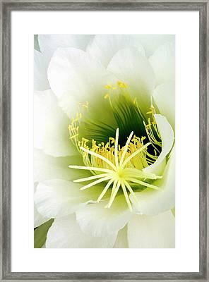 Usa, Arizona, Tucson, Night Blooming Framed Print
