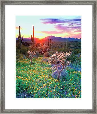 Usa, Arizona, Wildflowers And Cacti Framed Print by Jaynes Gallery