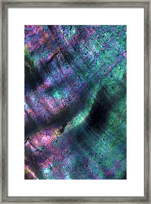 Usa, California Abalone Shell Close-up Framed Print
