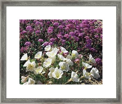 Usa, California, Anza Borrego Desert Framed Print
