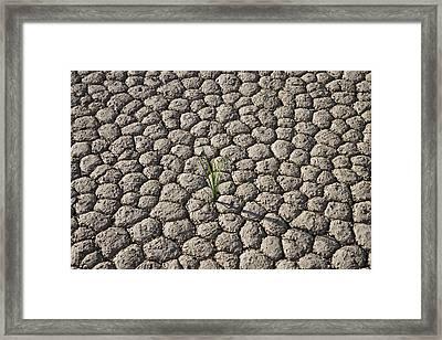 Usa, California, Death Valley, Grass On Framed Print
