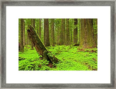 Usa, California, Humboldt Redwoods Framed Print by Jaynes Gallery