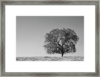 Usa, California Lone Oak Tree Framed Print