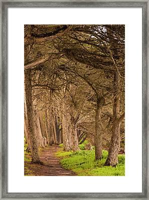 Usa, California, Morro Bay Framed Print